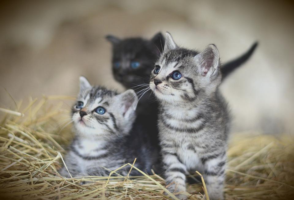 Zájem o speciální krmiva pro psy a kočky roste, zbytky z kuchyně se krmí spíš na venkově