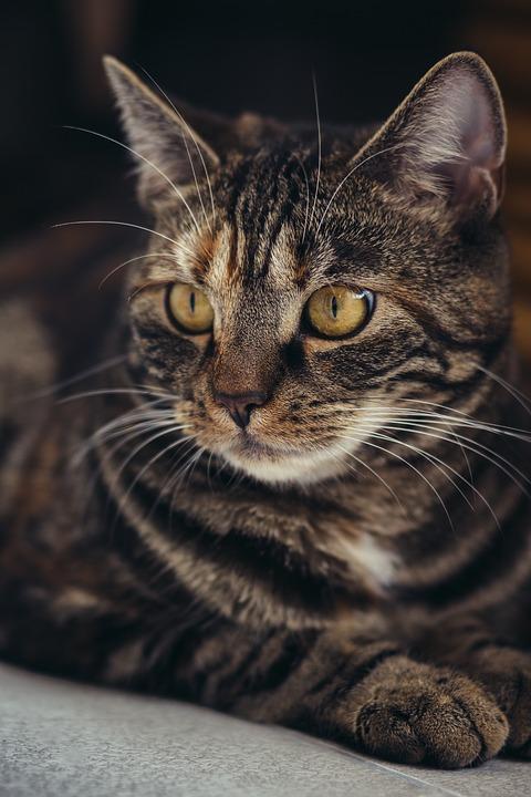 Pozvánka: 3. února 2019 proběhne 6. umisťovací výstava koček bez domova
