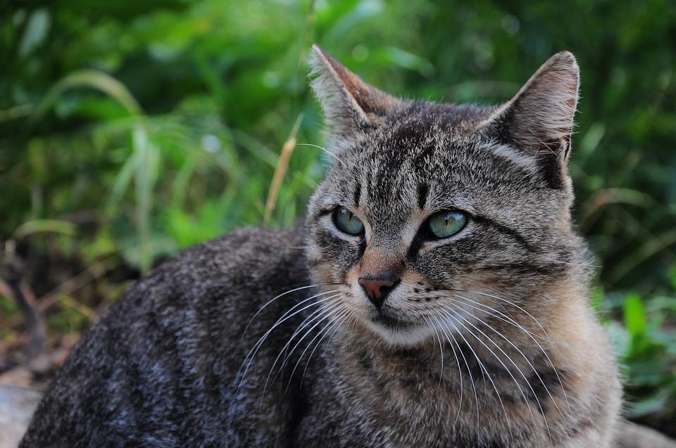Nemoc z kočičího škrábnutí