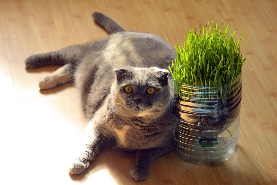 Tipy, jak přimět tlustou kočku k pohybu