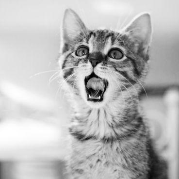 Jaro jí nemusí být proti srsti. Jak ochránit kočku před parazity?