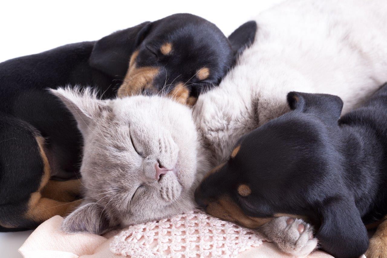 Nabídka koček k adopci na jednom místě