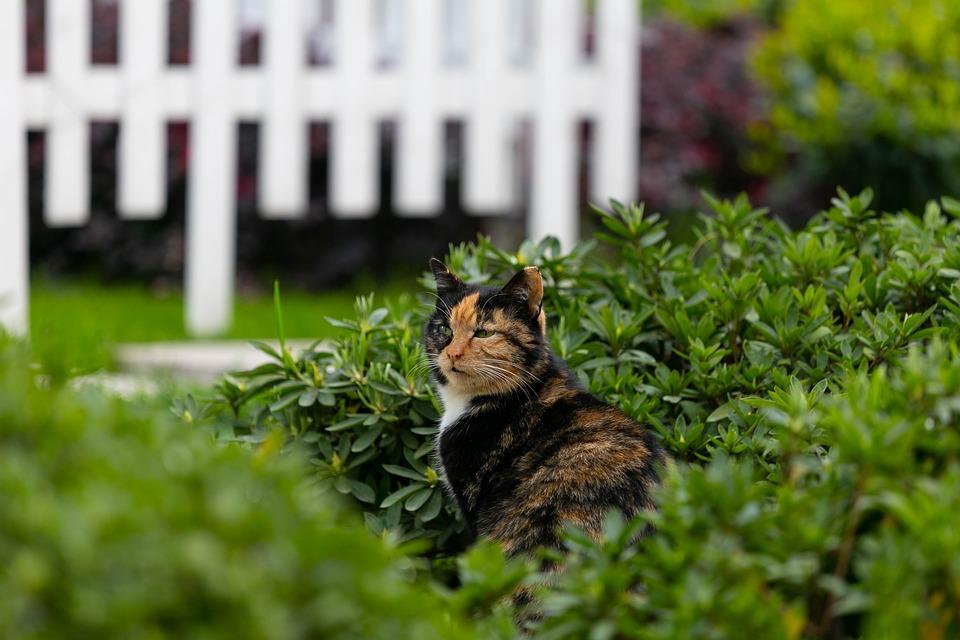 Kočka chce ven a hned zase zpátky