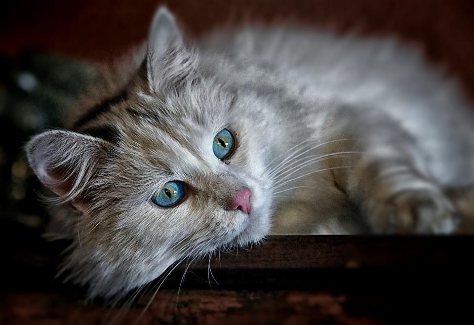 Vlastnit kočku přináší i zdravotní výhody