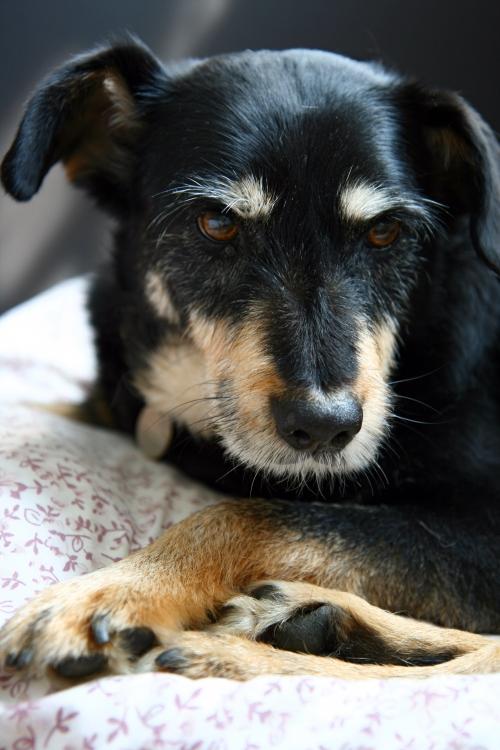 Pravidelná péče o psa - podrobněji