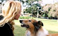 Výcvik psa - povely Štěkej, Aport a zdolávání překážek-kladina