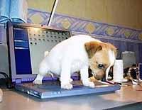 Nácvik čistotnosti psa v bytě
