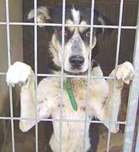 Čipování psů a útulky