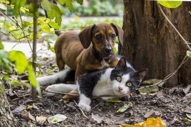 Soužití psa a kočky