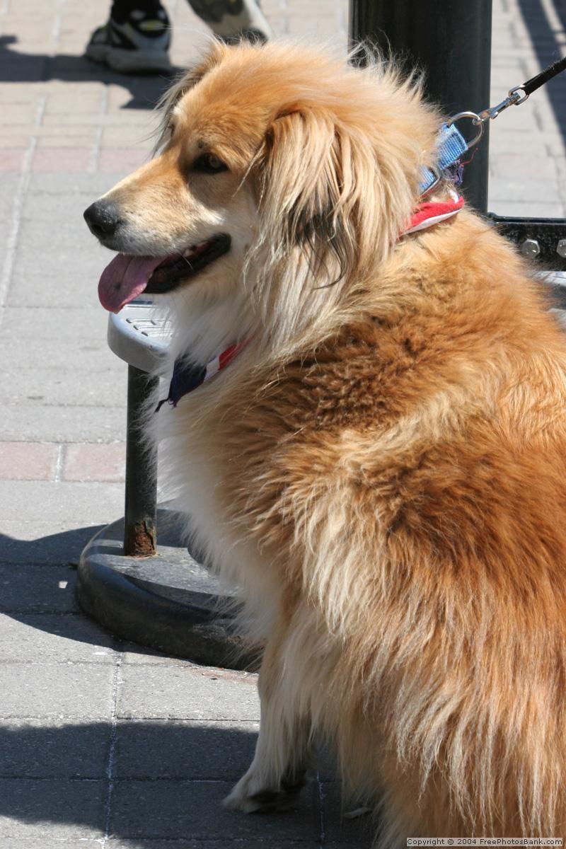 Pes před obchodem je v ohrožení!