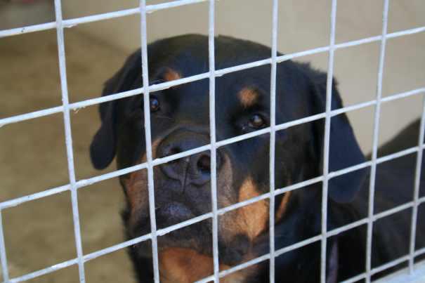 Psí jatka v Chebu přerůstají v mezinárodní ostudu