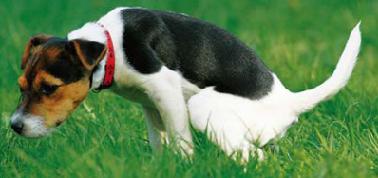 Jak psa odnaučit vykonávat potřebu doma?