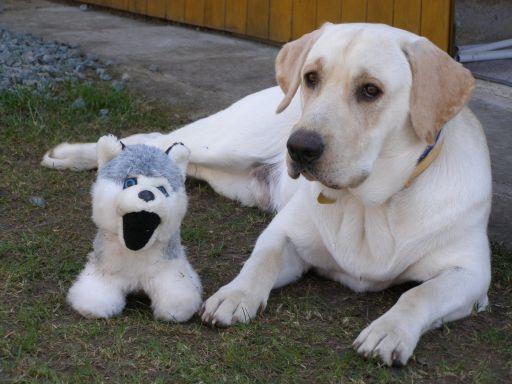 Hračky pro psy - přehled