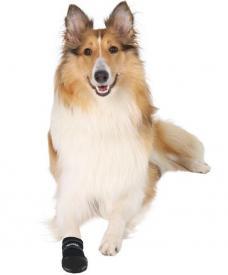 Botičky pro psy