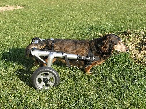 Invalidní vozík pro psy