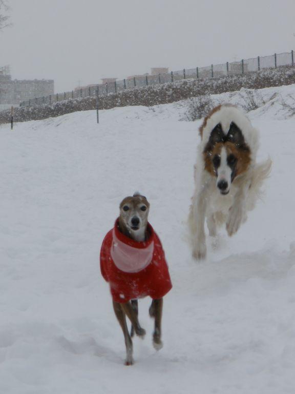 Psi a zimní období