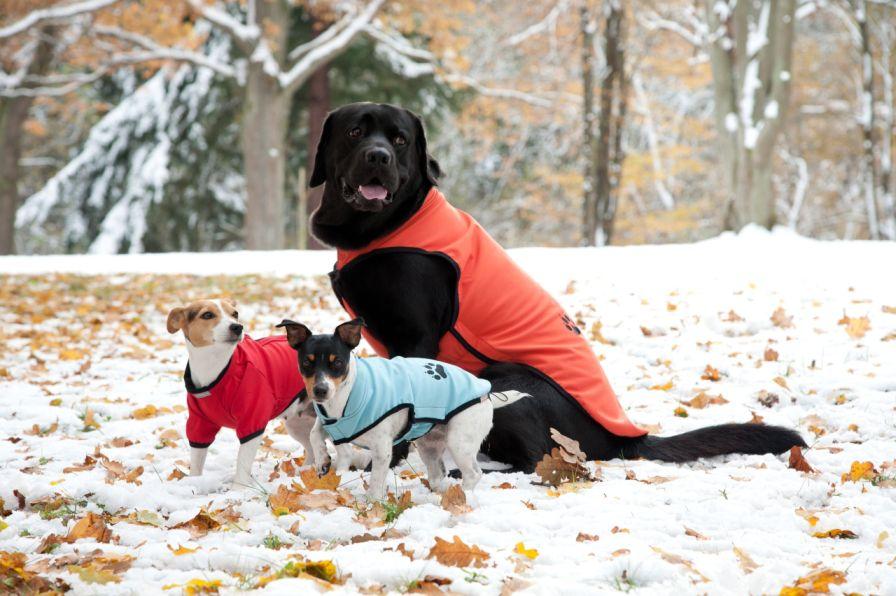 Psi v módě kopírují své páníčky