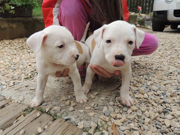 Kontakt se psy až po očkování?