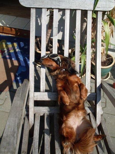 Sluneční brýle pro psa