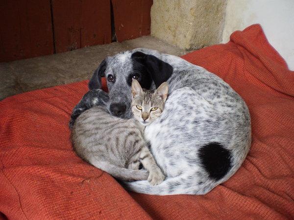 Krmení koček vs. psů