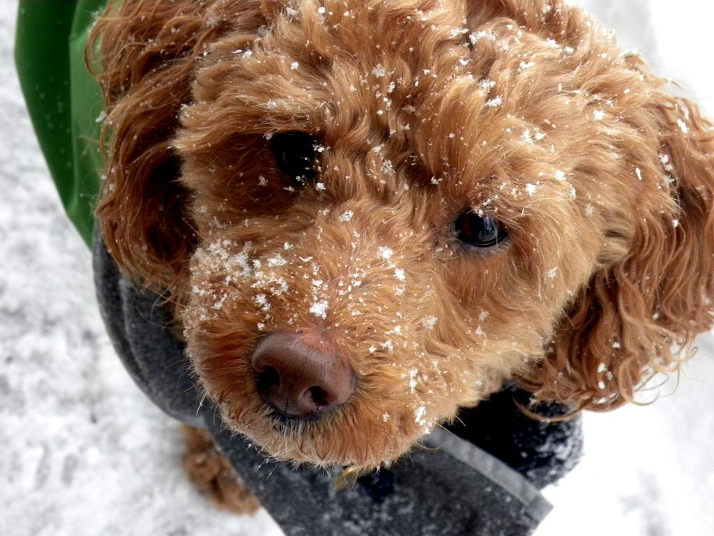 5 tipů, jak udržet psa vkondici i přes zimu