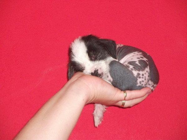 Novorozené štěně a jeho reflexy