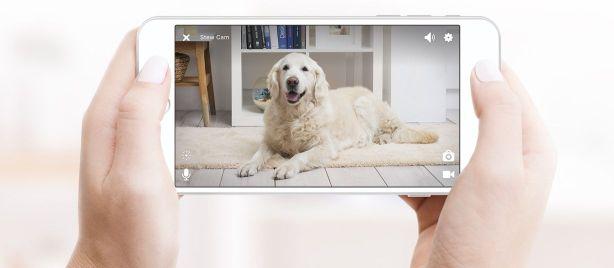 Technologická vychytávka: Podívejte se, co dělá váš domácí mazlíček, když nejste doma