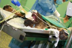 I psi mohou darovat krev