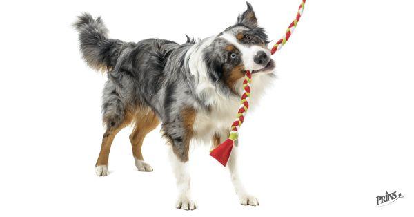 Dupnout, ohnout a táhnout! Tipy na bezpečné hračky pro psy