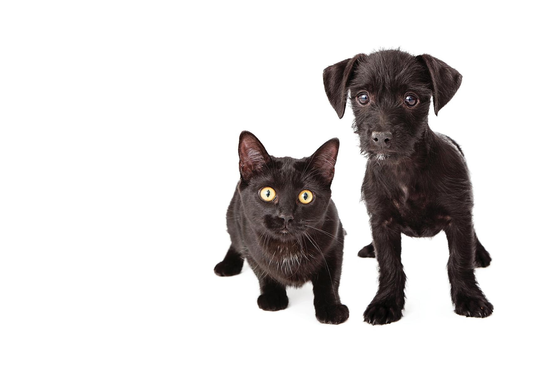 Na veletrhu FOR PETS si můžete nechat očipovat pejska nebo adoptovat kočičku
