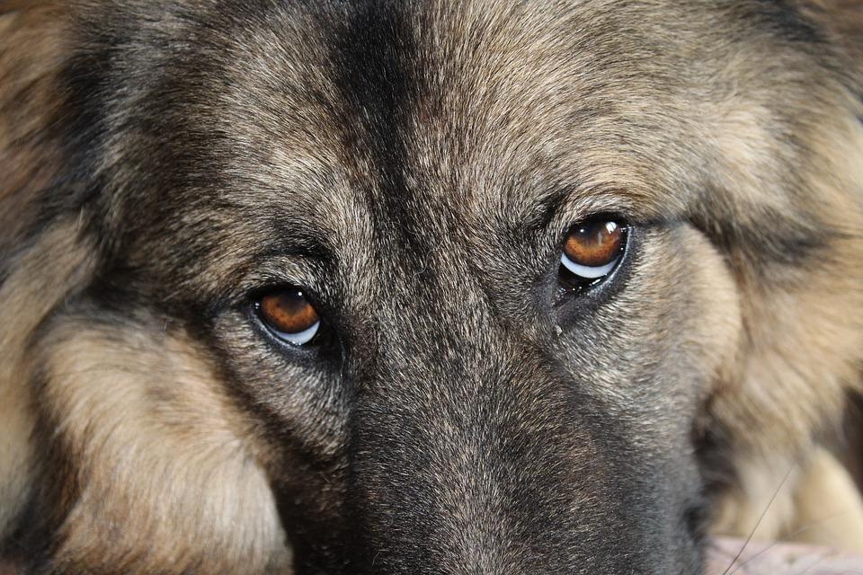 Zvýší se tresty za týrání zvířat?