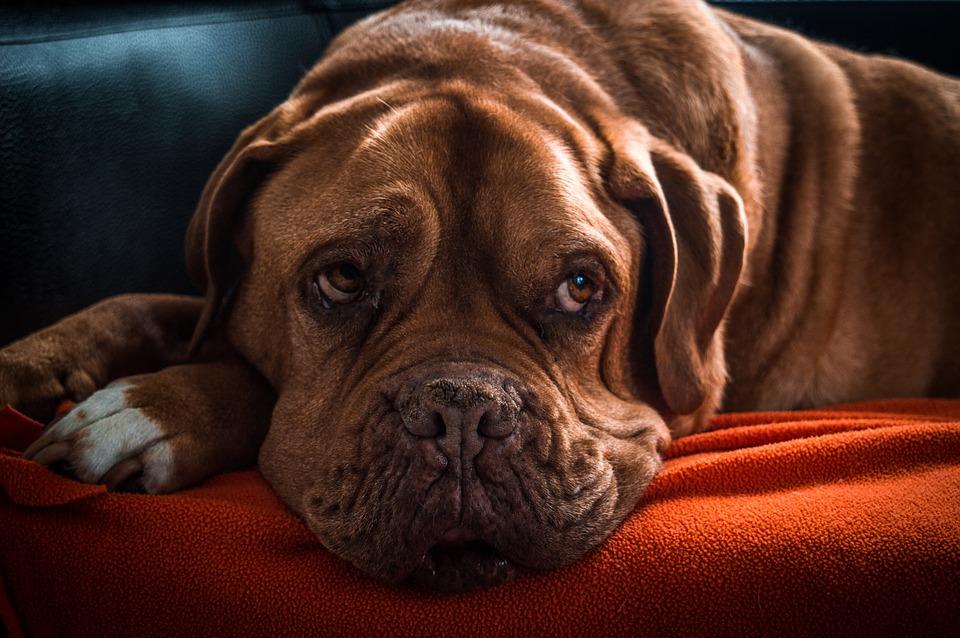 Preventivní kontroly – čeho by si měl všímat majitel psa?