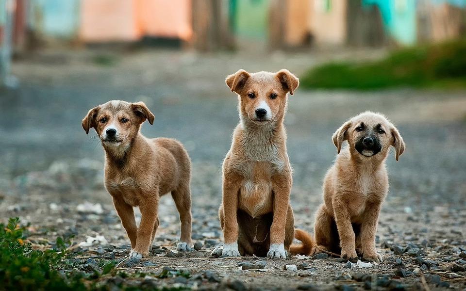 Mezinárodní den psů se slaví 26. srpna