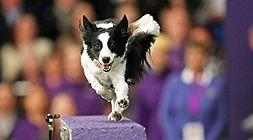 Pozvánka na DogFest: 1. září 2018 se uskuteční největší psí festival u nás