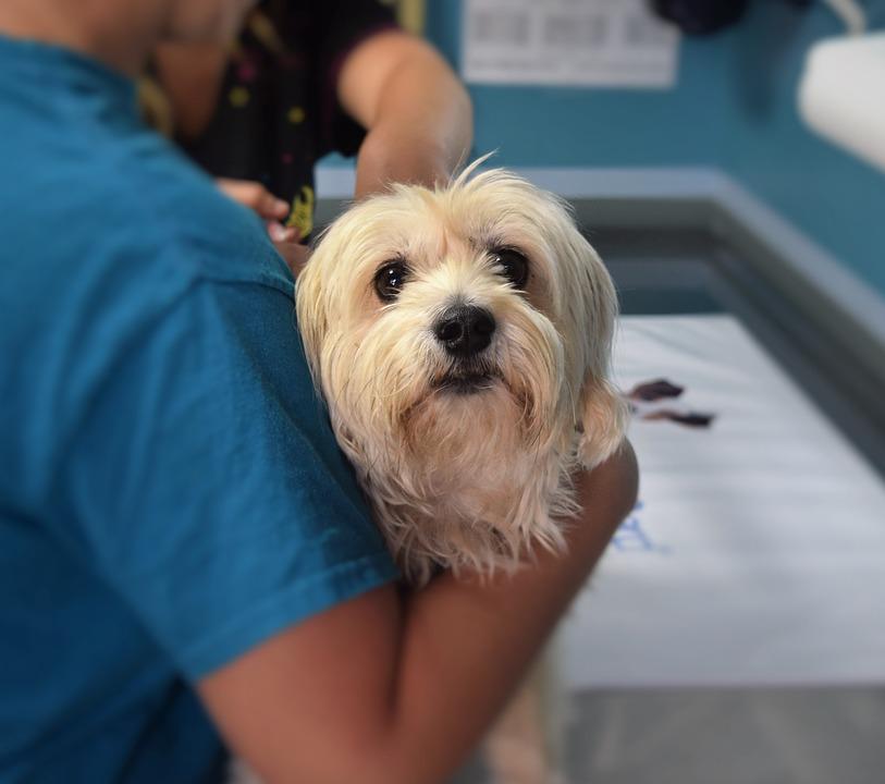 10 nejběžnějších onemocnění u psů podle odborníků na pojištění zvířat