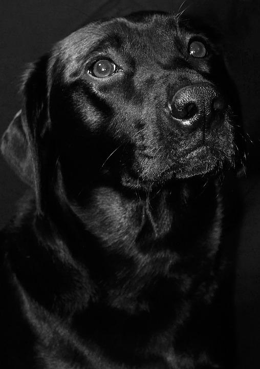 Syndrom černých psů