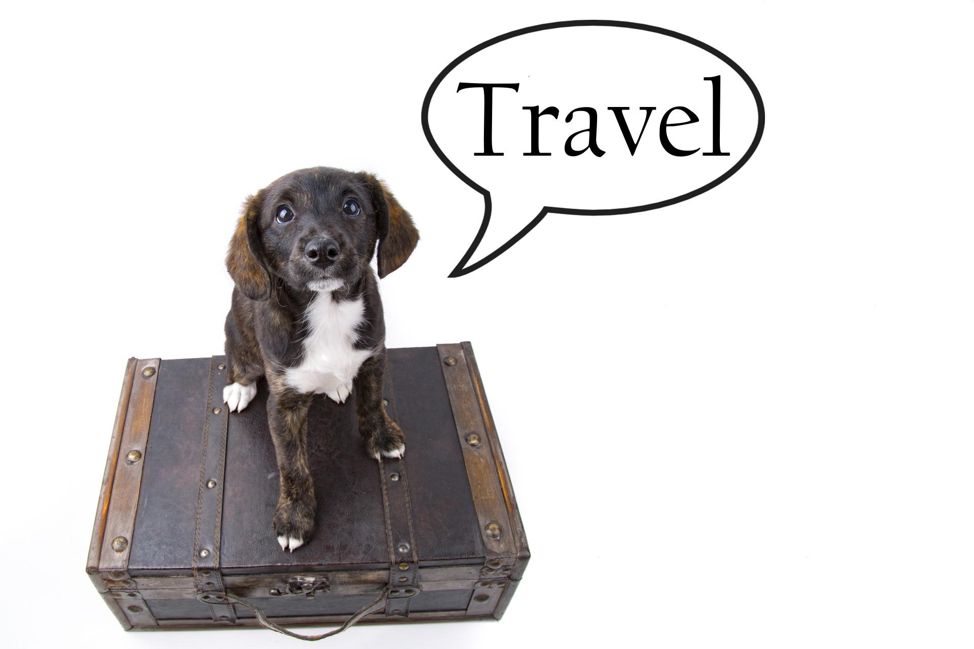 Cestování letadlem se psem