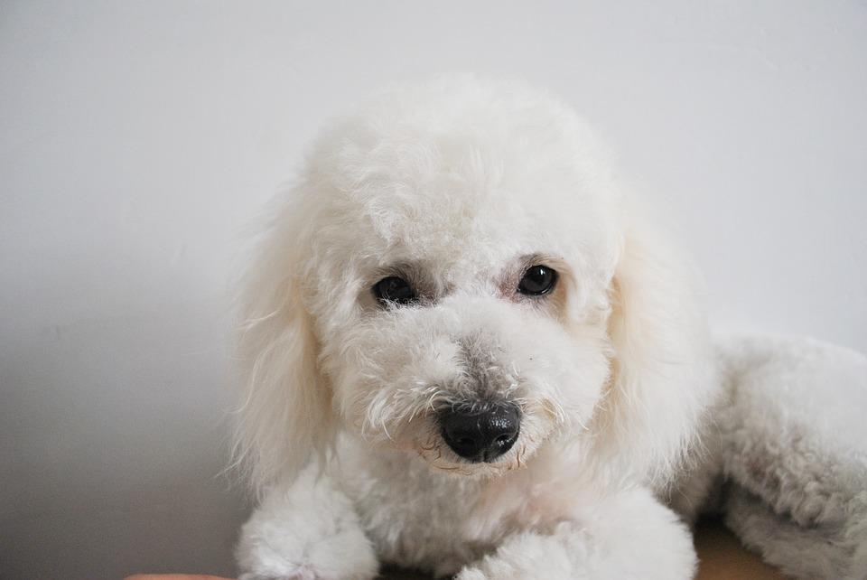 Na kartáčování zvykejte psa už odmalička