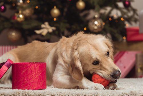 Vánoční nástrahy