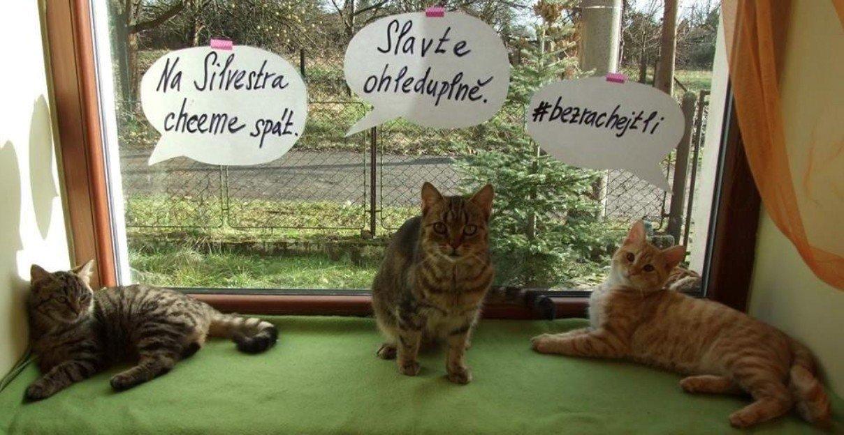 Obránci zvířat varují před riziky hlučného silvestrovského veselí
