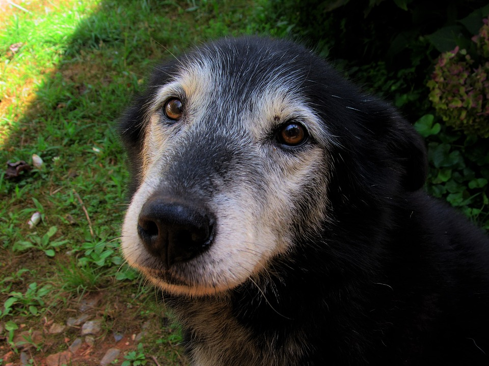 Myslete na zdraví vašeho psího seniora