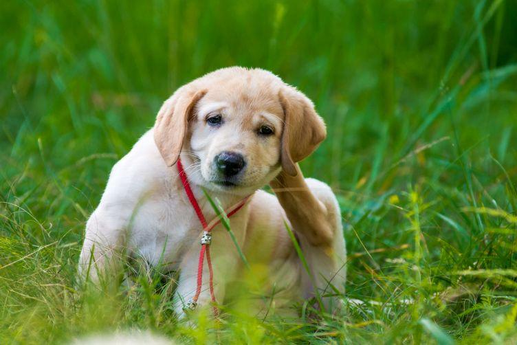 Ochrana psů a koček na dovolené