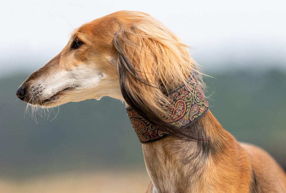 Blíží se rok 2020 a povinné čipování psů. Co mu říkají veterináři?