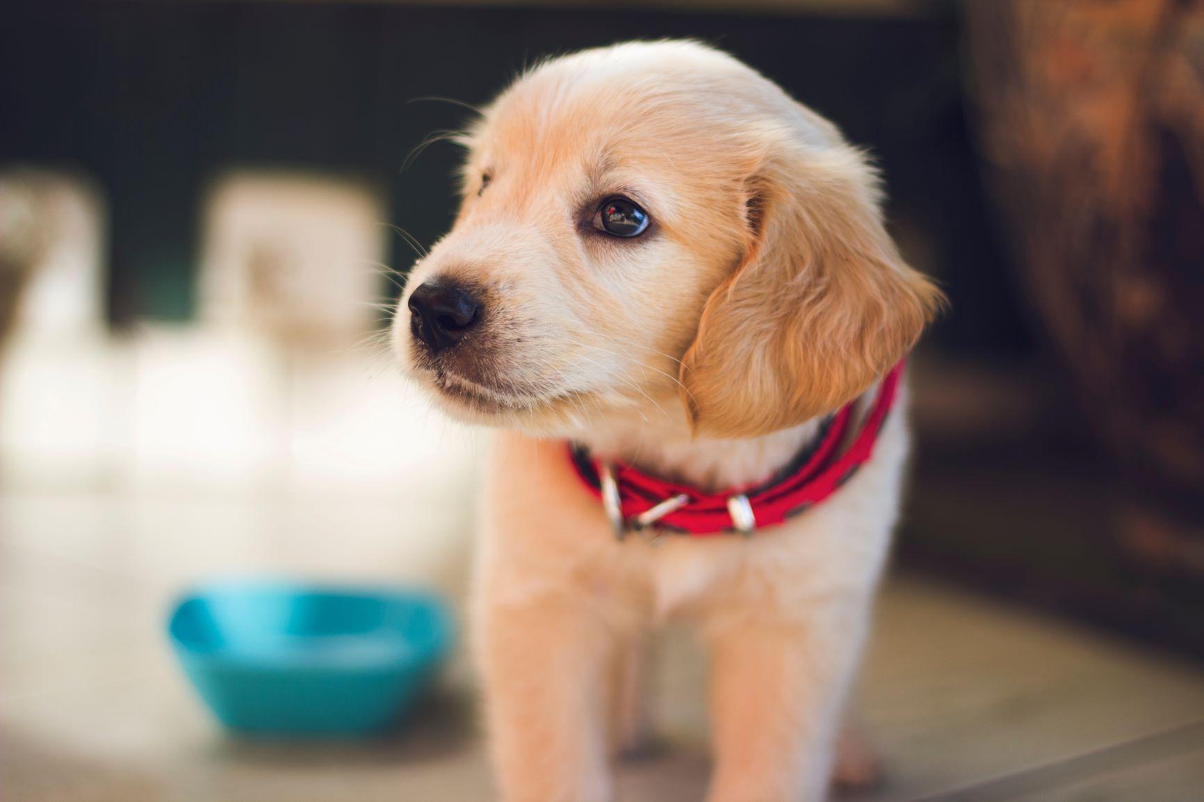 Časté chyby v krmení psů