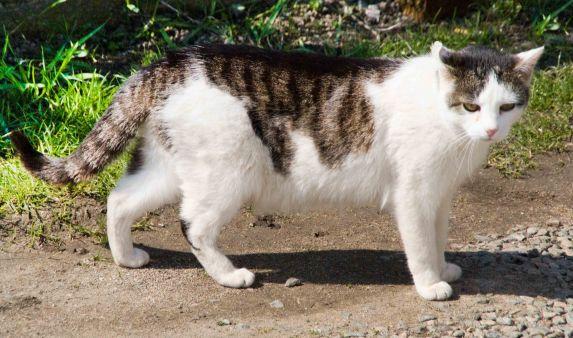 Opravdu těsné kočička obrázky
