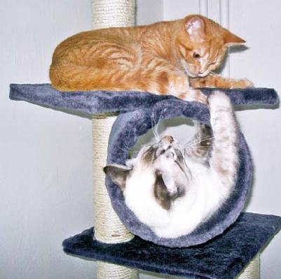 malá holá kočička těsně oholené lesbička kočička