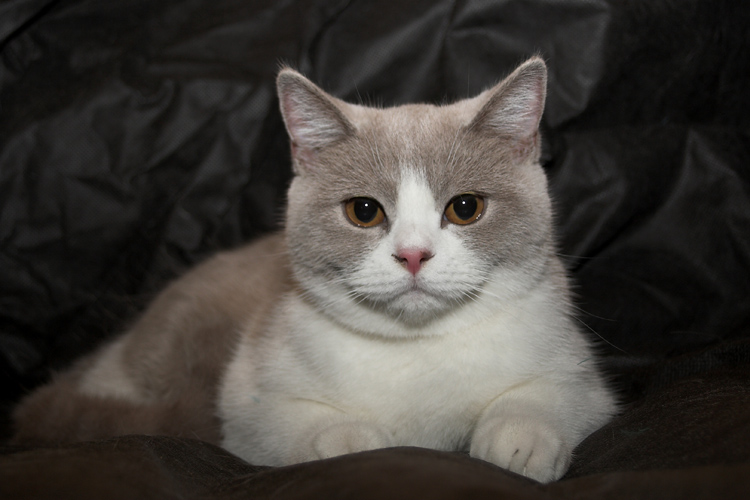 Zdarma velká chlupatá kočička