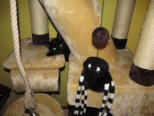 krásná černá kočička