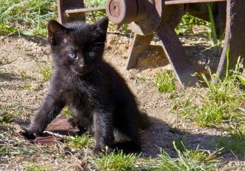 černé otevřené kočička fotky gay sex s ponožkami