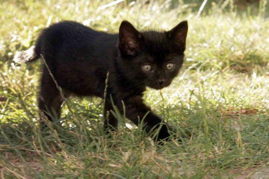 Nejlepší černá kočička fotky